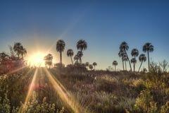 Sunrise on El Palmar National Park, Argentina Royalty Free Stock Photos