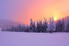Sunrise enlightens sky, mountain and trees standing in snowdrifts covered by frozen snow with yellow shine. Fabulous winter background for a leaflet Royalty Free Stock Photography