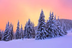Sunrise enlightens sky, mountain and trees standing in snowdrifts covered by frozen snow with yellow shine. Winter landscape for leaflets Royalty Free Stock Photo