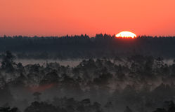 Sunrise in Estonian bog Stock Photos