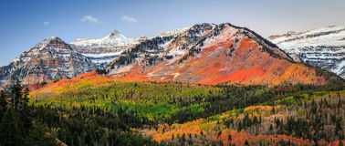 Sunrise fall color in the Wasatch Mountains. Stock Image