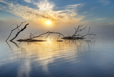 Sunrise. A fallen tree lying in the water with the sun coming up Stock Photo