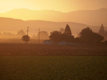 Sunrise at the farm. Ing area with perfectly flat land surrounded by small hills. Morning mist and fog with sun providing a yellow cast Royalty Free Stock Photography