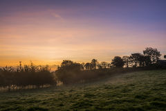 Sunrise in farm fields with trees and beautiful pink  sky, Cornwall, UK Royalty Free Stock Photography