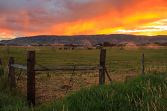 Sunrise fence and field landscape in the Wasatch Mountains, Utah. Royalty Free Stock Photos