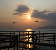 Sunrise at a ferry cruising followed by two seagulls Royalty Free Stock Images