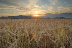 Sunrise in the field royalty free stock photo