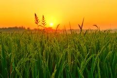 Sunrise on field stock photo