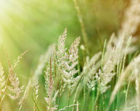Sunrise in a field of grass Stock Image