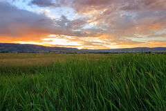 Sunrise field landscape in the Wasatch Mountains, Utah. Stock Photography