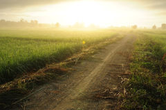 Sunrise in the field. Royalty Free Stock Image