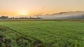 Sunrise on field. Sunrise in Rice field so beautiful Royalty Free Stock Photography