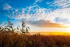 Sunrise in the field royalty free stock photography