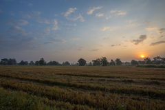 Sunrise in fields of Thailand Royalty Free Stock Photo