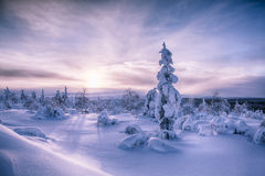 Sunrise in Finland. Lapland in snow Stock Image