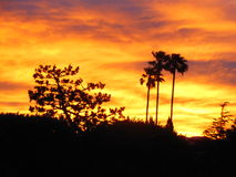 Sunrise on Fire Royalty Free Stock Photography