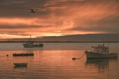 Sunrise at a Fish Pier on Cape Cod with boats in foreground and seagull flying overhead Stock Photo
