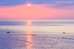 Sunrise and Fishing Nets on Sea Surface. Royalty Free Stock Photos