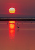 Sunrise and Flamingo Stock Photography