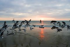 Sunrise in Florida. Birds look for their morning meal during the sunrise in Florida Royalty Free Stock Photos