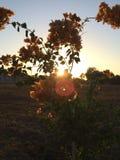 Sunrise Flower. Bolas lenses flare orange flower sunrise silhouette royalty free stock images