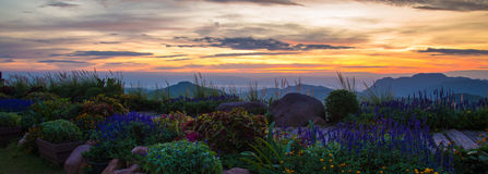 Sunrise flower garden. Sunrise beautiful on flower garden and Mountain Background Royalty Free Stock Photography