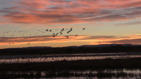 Sunrise Flyout at Bosque stock video