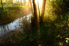 Sunrise through the fog in a forest river in the early summer morning Stock Photos