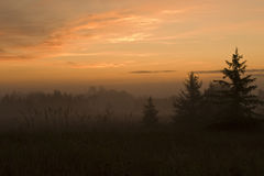 Sunrise with fog on a meadow Royalty Free Stock Images