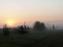Sunrise. In the fog on a meadow with single trees and shrubs Royalty Free Stock Image