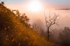 Sunrise in the fog a mysterious tree Royalty Free Stock Photos