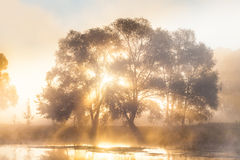 Sunrise in the fog a mysterious tree on river Stock Photo