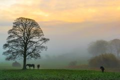 Sunrise Through the Fog royalty free stock photos