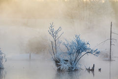 The sunrise in fog and soft rime Royalty Free Stock Images