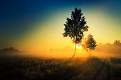 Sunrise in fog and a tree at the road Royalty Free Stock Image
