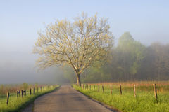 Sunrise on Foggy country road Royalty Free Stock Photography