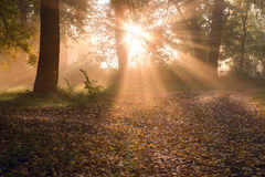 Sunrise in foggy forest Royalty Free Stock Image