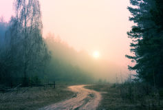 Sunrise in foggy forest Royalty Free Stock Photos
