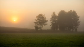 Sunrise at foggy meadow Stock Image