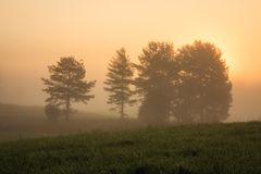 Sunrise at foggy meadow Royalty Free Stock Photos