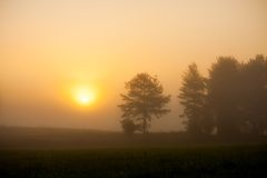 Sunrise at foggy meadow Stock Photo