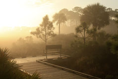 Sunrise on a Foggy Morning in a Florida Swamp Stock Image
