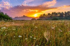 Sunrise on foggy morning meadow with spider webs. Polish countryside Stock Images