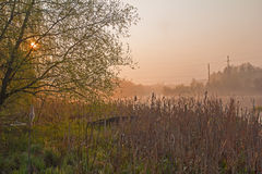 Sunrise on a foggy morning at Swamp Stock Photo