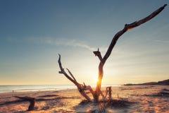 Sunrise at Folly Beach Royalty Free Stock Photo
