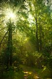 Sunrise in forest Stock Photos