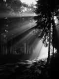 Sunrise in forest Stock Images