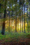 Sunrise in the forest Royalty Free Stock Images