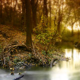 Sunrise in the forest. Daybreak in the forest during fall, some fog royalty free stock image