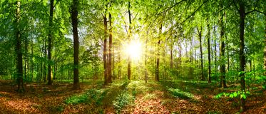 Sunrise in the forest Stock Images